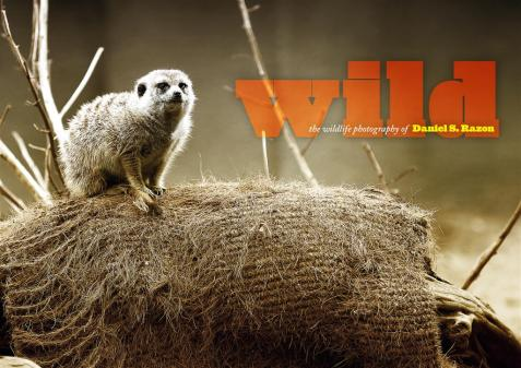 The Wild: Wildlife Photography of Daniel S. Razon coffee table book design by Mr. Jocas A. See